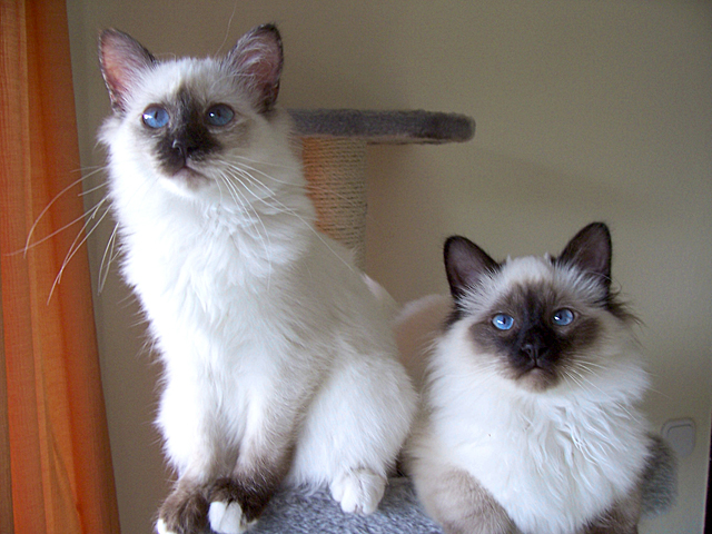 birman-overview