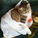 どんな種類の素材が好み?かわいい猫が入り込んでいくおもしろい場所