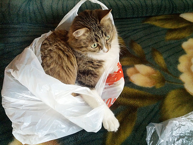 cat-in-the-bag