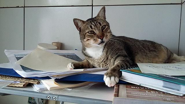 cat_come_to_interfere