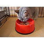 初めての猫の手作り餌に挑戦!レシピは年齢別に気をつけて
