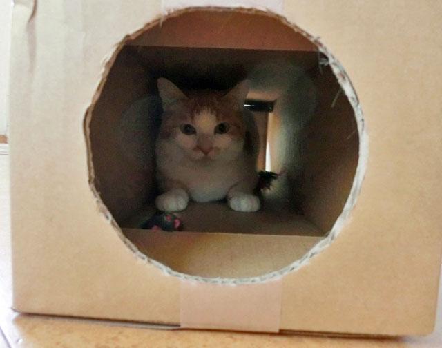 kind_of_cat-cat_hiding