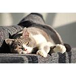 猫が病気になるリスクのある手作り餌の食材とは!