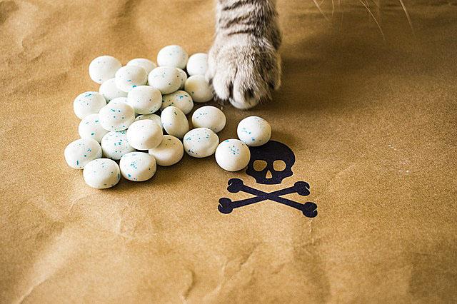 kind_of_cat-ingredients_death
