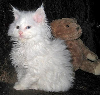 kind_of_cat-lambkin_overview