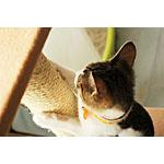 かわいい猫の習性や種類をもっと知ろう!するどい武器にはご注意を!
