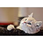 猫が飛びつく手作りの餌を作りたい!牛肉ミンチのレシピに挑む
