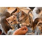 鶏肉ミンチを使った猫ちゃんの餌を手作りしてみた!簡単レシピ紹介