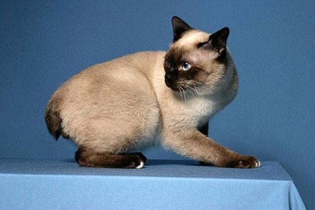 kind_of_cat-toy_bob