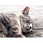 ダイエットが必要な猫ちゃんのために手作りの餌のレシピを紹介