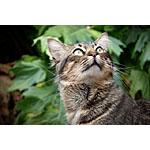 猫の手作りの餌で大活躍!レタスとサニーレタスのレシピ