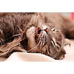 猫の手作りの餌にきのこを使って免疫力を高めるレシピに!