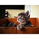 猫の餌におすすめ!手作りのシーチキンのレシピはいかが?
