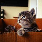 マグロ大好き猫ちゃんのための手作りの餌はどんなレシピがいい?
