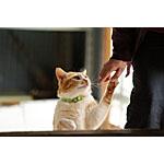 猫にスープを手作りしたい!おすすめのレシピで餌の時間が待ち遠しい