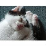 猫の月齢ごとの餌の与え方と手作りの離乳食レシピ