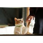 猫の肥満や糖尿病に対応する手作りのレシピを提案